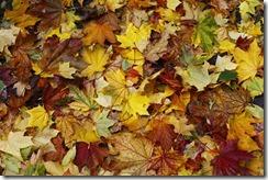 Accorder sa physiologie aux tonalités de l'automne