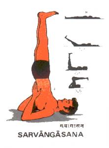 La posture de la chandelle