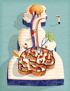 "L'intestin est un ""second cerveau"""