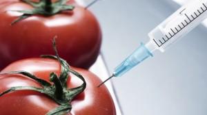 Les OGM inquiètent