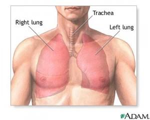 Les lobes inférieurs des poumons apportent du calme