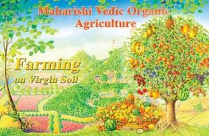 """L'agriculture védique va plus loin que le """"bio"""""""
