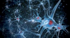 La santé du cerveau est essentielle