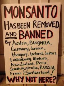 Bras de fer avec Monsanto
