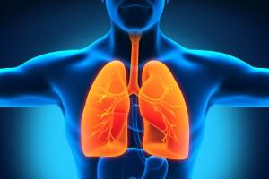 Les lobes inférieurs des poumons plus sollicités
