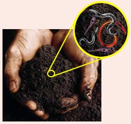 Le sol est un organisme vivant