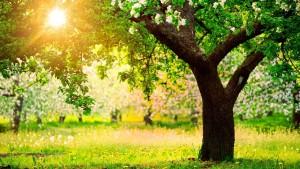 Le renouveau de la nature