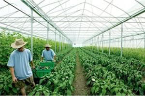 Agriculture biovédique Maharishi aux Etats Unis