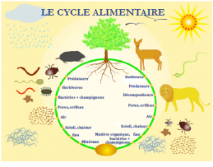 Le cycle alimentaire