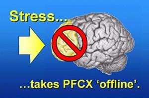 Le stress perturbe le cortex préfrontal