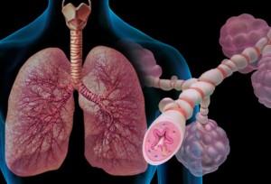 Les poumons véhiculent l'oxygène dans le sang