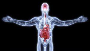 La santé de l'intestin