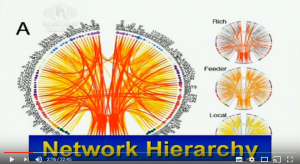 Hiérarchie des hubs du cerveau