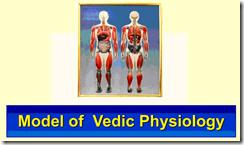 Modèle de la physiologie védique